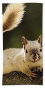 White Squirrel Beach Towel