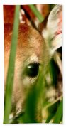 White Tailed Deer Fawn Hiding In Grass Beach Towel