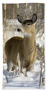 White-tailed Deer In A Snow-covered Beach Towel
