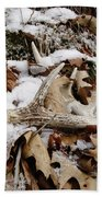 Whitetail Deer Antler  - Half Of 10 Beach Towel