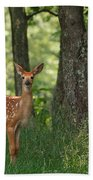 Whitetail Deer Fawn Beach Towel