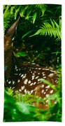 Whitetail Fawn And Ferns Beach Towel