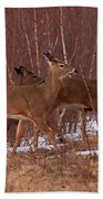 Whitetails On The Move Beach Towel