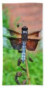 Widow Skimmer Dragonfly - Libellula Luctuosa Beach Towel