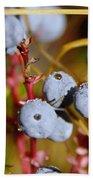 Wild Blue Berries With Water Drops  Beach Towel