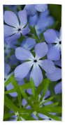 Wild Blue Phlox Flower 1 A Beach Towel