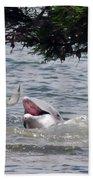 Wild Dolphin Feeding Beach Towel
