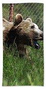 Wild Life Safari Bear Beach Towel