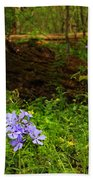 Wild Phlox In The Woodlands Beach Towel