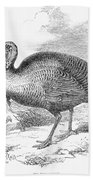 Wild Turkey, 1853 Beach Towel