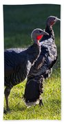 Wild Turkeys Beach Towel
