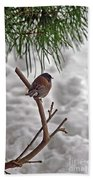 Winter Bird Beach Towel