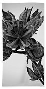 Winter Dormant Rose Of Sharon - Bw Beach Towel