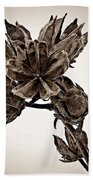 Winter Dormant Rose Of Sharon - S Beach Towel