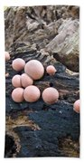 Wolf's Milk Slime Mold - Lycogala Epidendrum Beach Towel