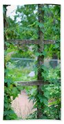 Wooden Trellis And Vines Beach Towel