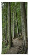 Woodland Forest Path Beach Towel