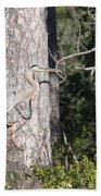 Woodland Great Blue Heron Beach Towel