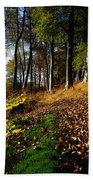 Woods During Autumn Beach Towel