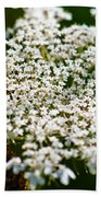 Yarrow Plant Flower Head  Beach Towel