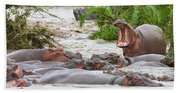 Yawning Hippo Hippopotamus Amphibius Beach Towel