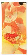 Yellow And Peach Rose Beach Towel
