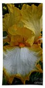 Yellow And White Iris Beach Towel