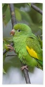 Yellow-chevroned Parakeet Brotogeris Beach Towel