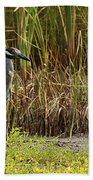 Yellow-crowned Night-heron Beach Towel