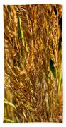 Yellow Feather Reed Grass Beach Towel