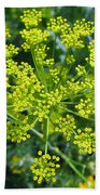 Yellow Firework Or Dill In Its Glory Beach Towel