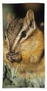 Yellow Pine Chipmunk, Kananaskis Beach Towel