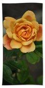 Yellow Rose Of Baden Beach Towel
