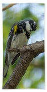 Yellow Rumped Warbler Looking Down Beach Towel