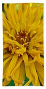 Yellow Zinnia_9480_4272 Beach Towel