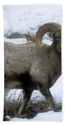 Yellowstone Big Horn Sheep Beach Towel