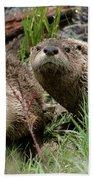Yellowstone River Otters Beach Towel