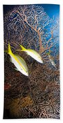 Yellowtail Snappers And Sea Fan, Belize Beach Towel