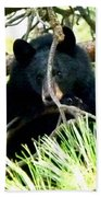 Young Black Bear Beach Towel