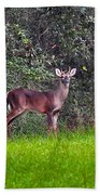 Young Buck Beach Towel