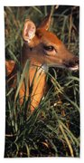 Young Deer Laying In Grass Beach Towel