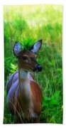 Young Deer Beach Towel
