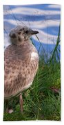 Young Gull Beach Towel