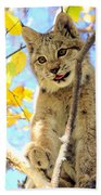 Young Lynx In A Tree Beach Towel
