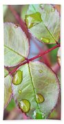 Young Rose Leaves Beach Towel
