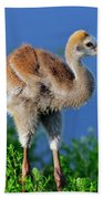 Young Sandhill Crane Beach Towel