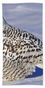 Young Snowy Owl Beach Towel