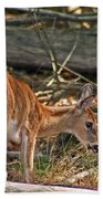 Young Whitetail Beach Towel