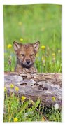 Young Wolf Cub Peering Over Log Beach Towel