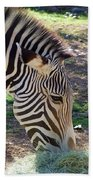 Zebra At Lunch Beach Towel
